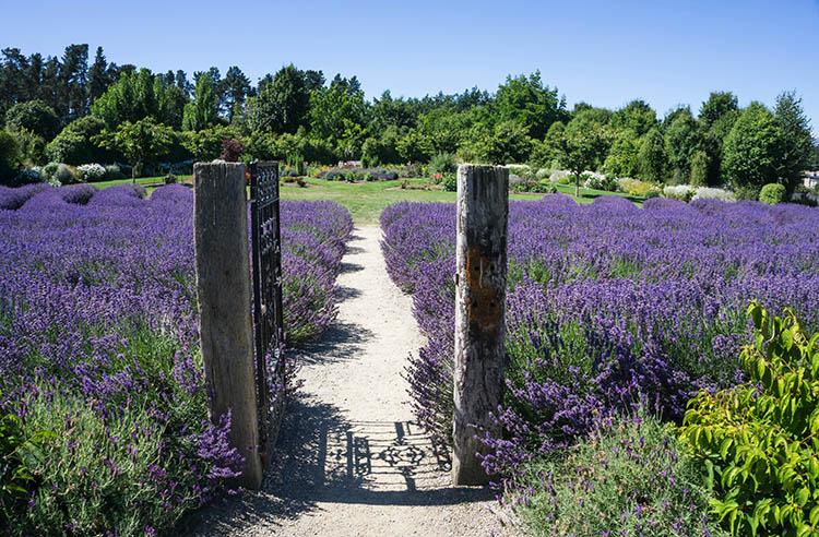 Wanaka Lavender Farm entrance, New Zealand