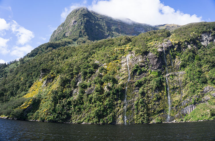 A Doubtful Sound Cruise: The Best Day Trip in New Zealand?