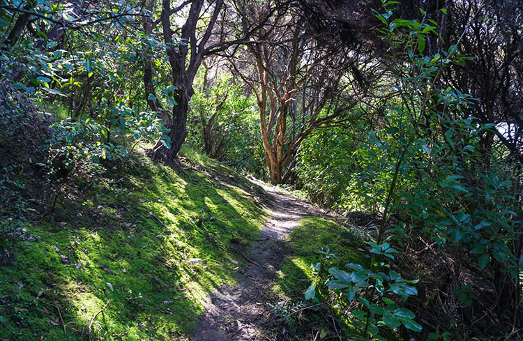 A forest track on Banks Peninsula, New Zealand