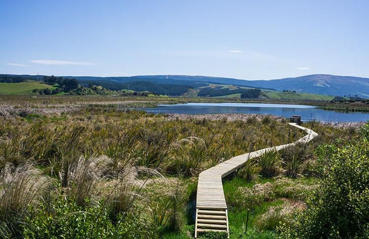 Boardwalk at the Sinclair Wetlands, Dunedin, New Zealand