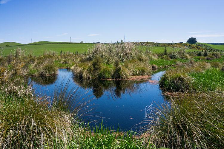 Hiking the Sinclair Wetlands, Dunedin, New Zealand