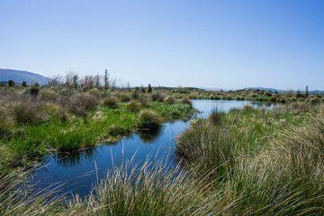 Sinclair Wetlands, Dunedin, New Zealand