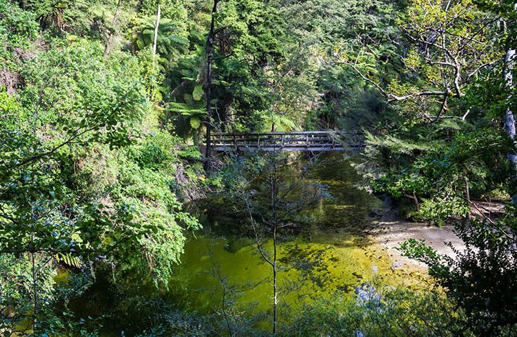 A river in Abel Tasman, New Zealand