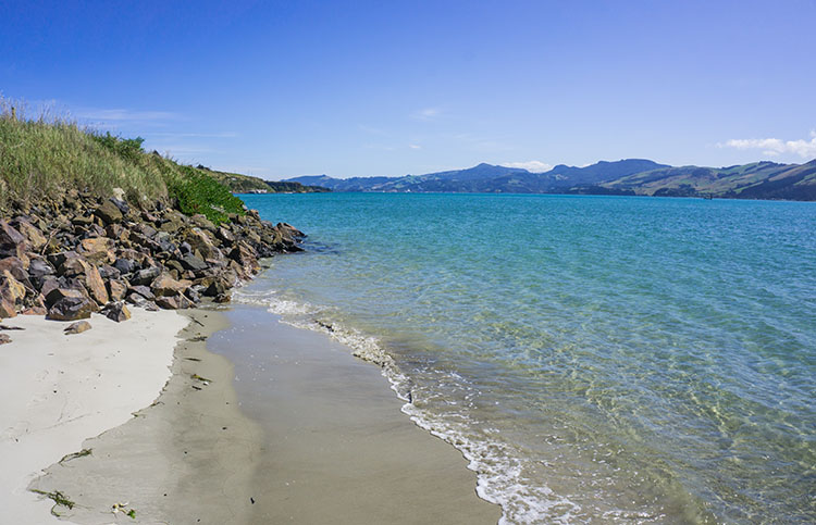 Harrington Point Beach, Dunedin, New Zealand