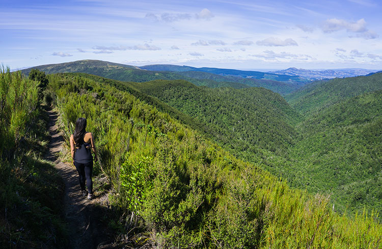 Hiking in the Silver Peaks Reserve, Dunedin, New Zealand
