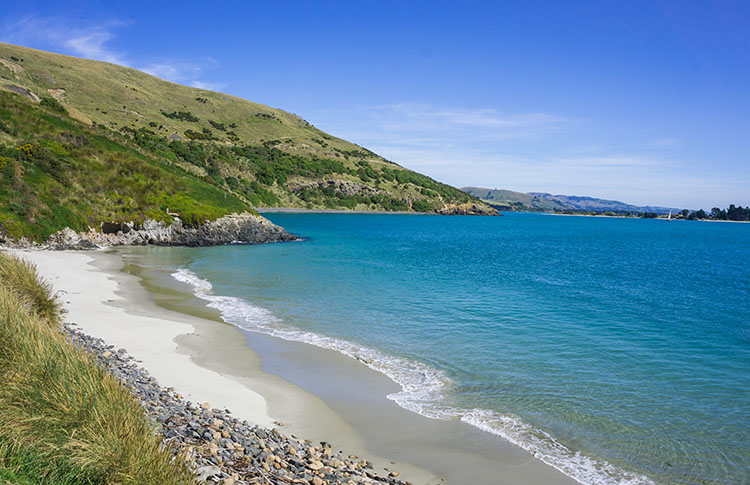 A nice beach at Taiaroa Head, Dunedin, New Zealand