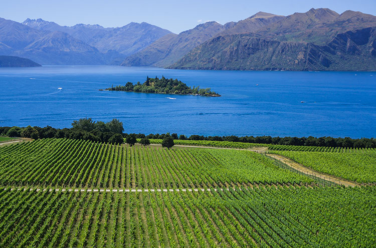 Rippon Vineyard, Wanaka, New Zealand