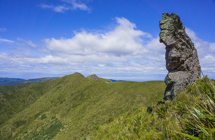 18 of the Best Walks in Dunedin (For All Fitness Levels)
