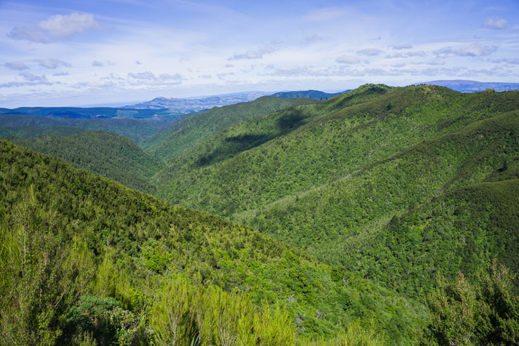 A stunning Silver Peaks Reserve view, Dunedin, New Zealand