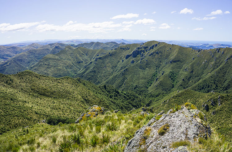 Silver Peaks Reserve viewpoint, Dunedin, New Zealand