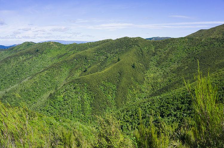 Green hills near Dunedin, New Zealand