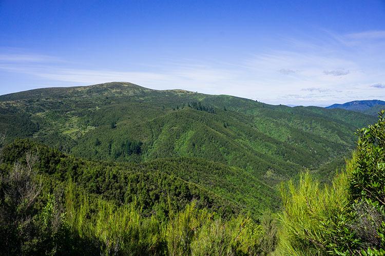 Hiking in Dunedin, New Zealand