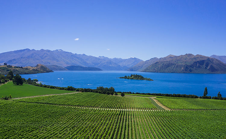Rippon Vineyard -- a stunning view over Lake Wanaka, New Zealand