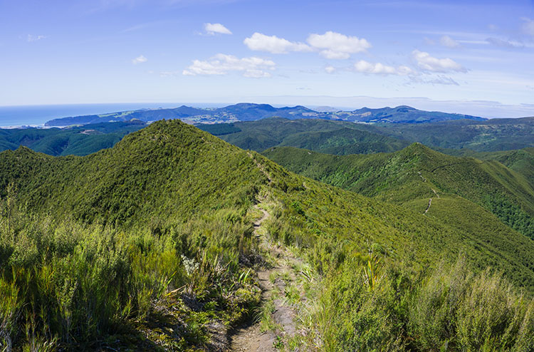 Hiking in the hills above Dunedin, New Zealand