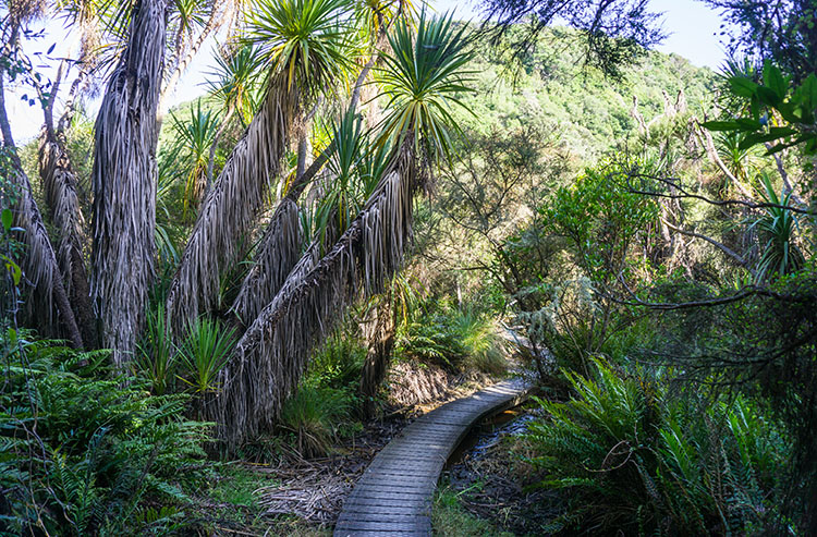 A track through the forest, Dunedin, New Zealand