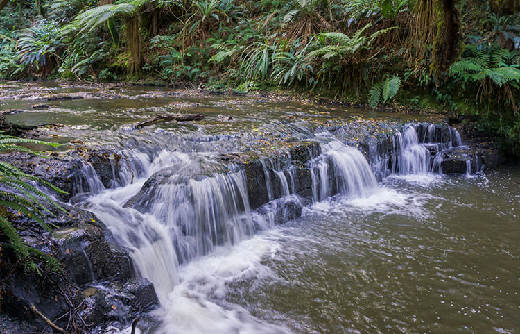 Small cascades in the Catlins, New Zealand