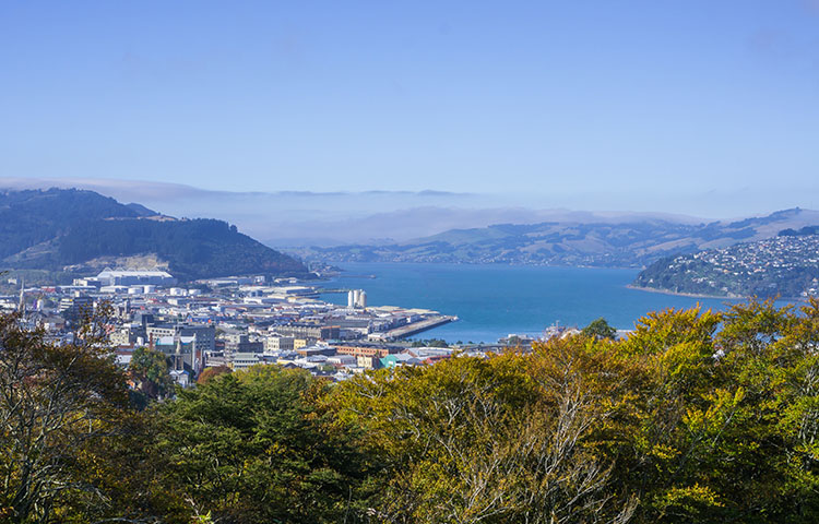 Unity Park Lookout and the Town Belt, Dunedin