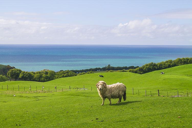Driving from Dunedin to Oamaru, New Zealand