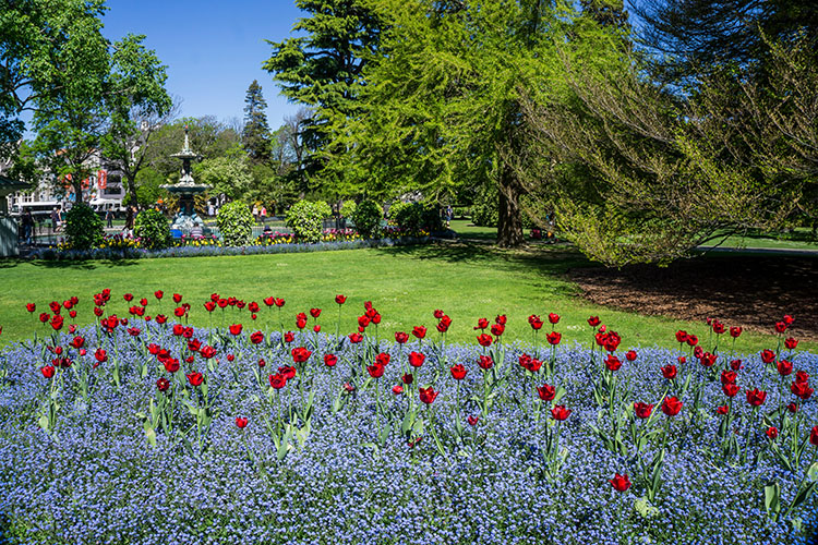 Things to do in Christchurch, New Zealand -- the Botanic Gardens