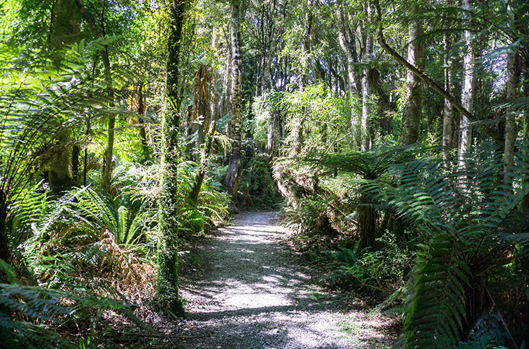 Waipohatu bush walk, the Catlins, New Zealand