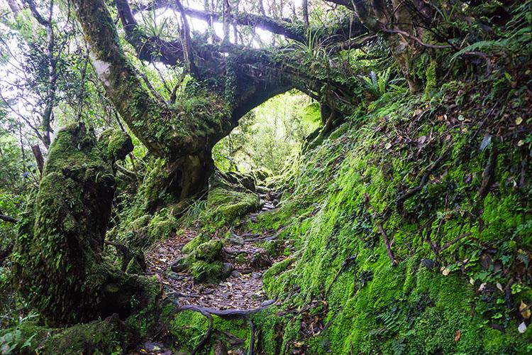 Alex Knob track bush, New Zealand